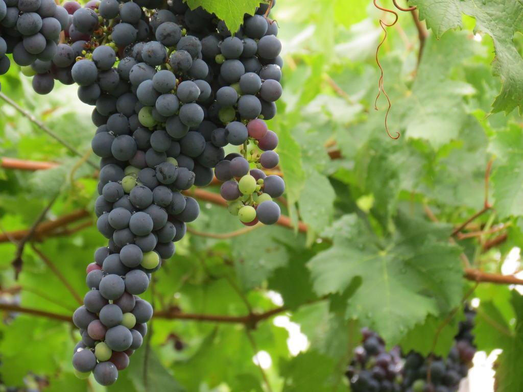 Apesar das vinícolas serem os destaques da região, o Vale dos Vinhedos conta com diversas atrações alternativas
